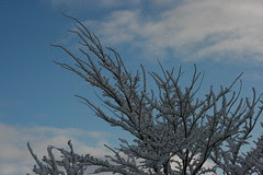 Bare snowy branches reach skyward
