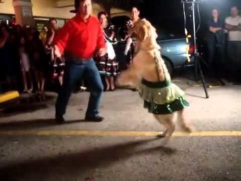 diaforetiko.gr : hqdefault7 Σκύλος χορεύει Σάλσα καλύτερα από άνθρωπο!!! Θα μείνετε άφωνοι!! (βίντεο)