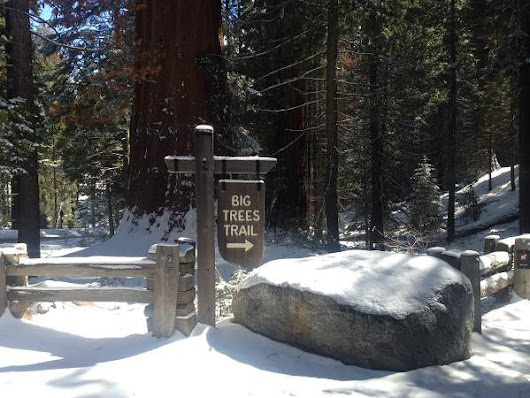Hiking The Giant Forest In Sequoia National Park In March - Coolhikinggear.com