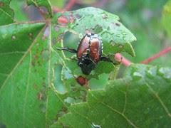Wet beetle