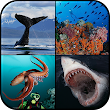Ocean Encounters: A Photographic Exploration of Marine Wildlife by Brandon Cole