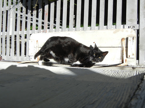 Napping Cat 2869