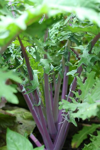forrests of kale