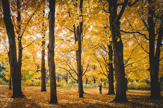 Fall might be outrageously beautiful in Toronto this year