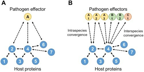 Why did filamentous plant pathogens evolve the potential to secrete hundreds of effectors to enable disease? - Thordal-Christensen - 2018 - Molecular Plant Pathology - | How microbes emerge