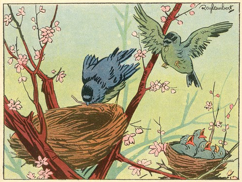 41 les nids