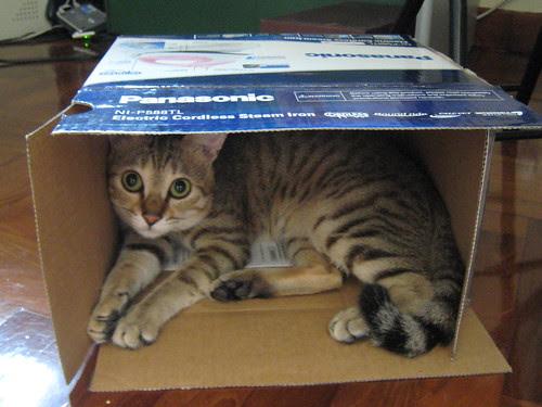 I like boxes