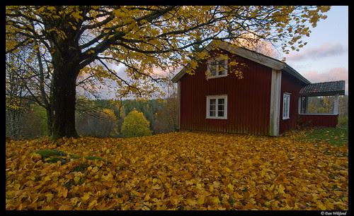 Autumn evening in Sweden