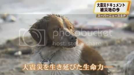 Dog In Japan Stays Loyal Beside Dying Friend