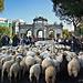 Las ovejas llegando a la Puerta de Alcalá