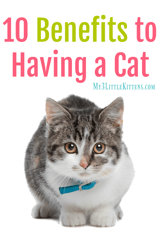 10 Benefits to Having a Cat - My 3 Little Kittens