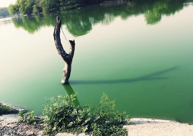 Of glassy lakes