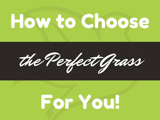 How to Choose the Perfect Grass for You! | PurchaseGreen