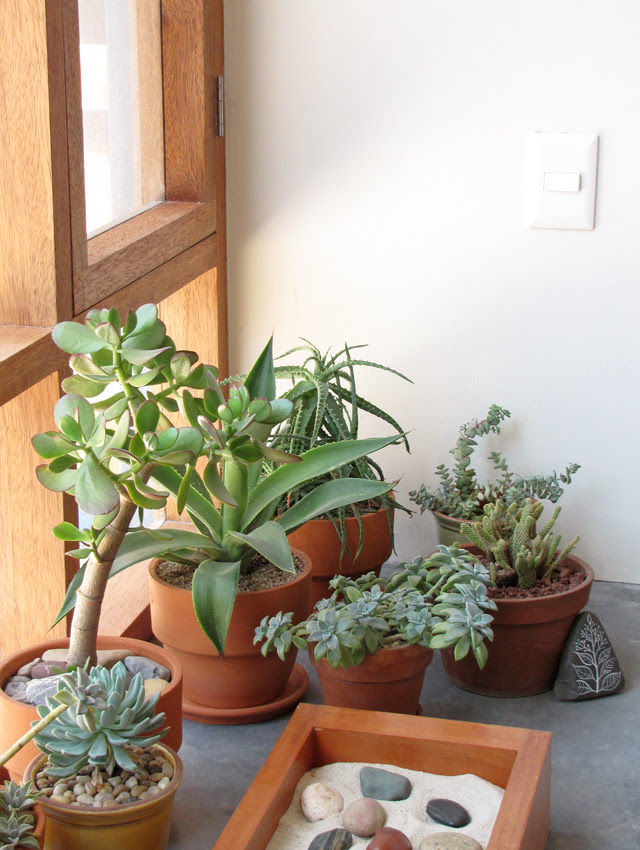 Succulents by the window
