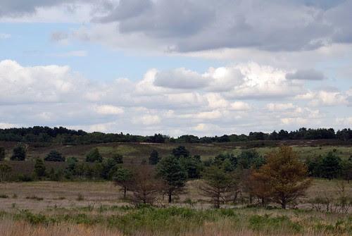 Chobham Common