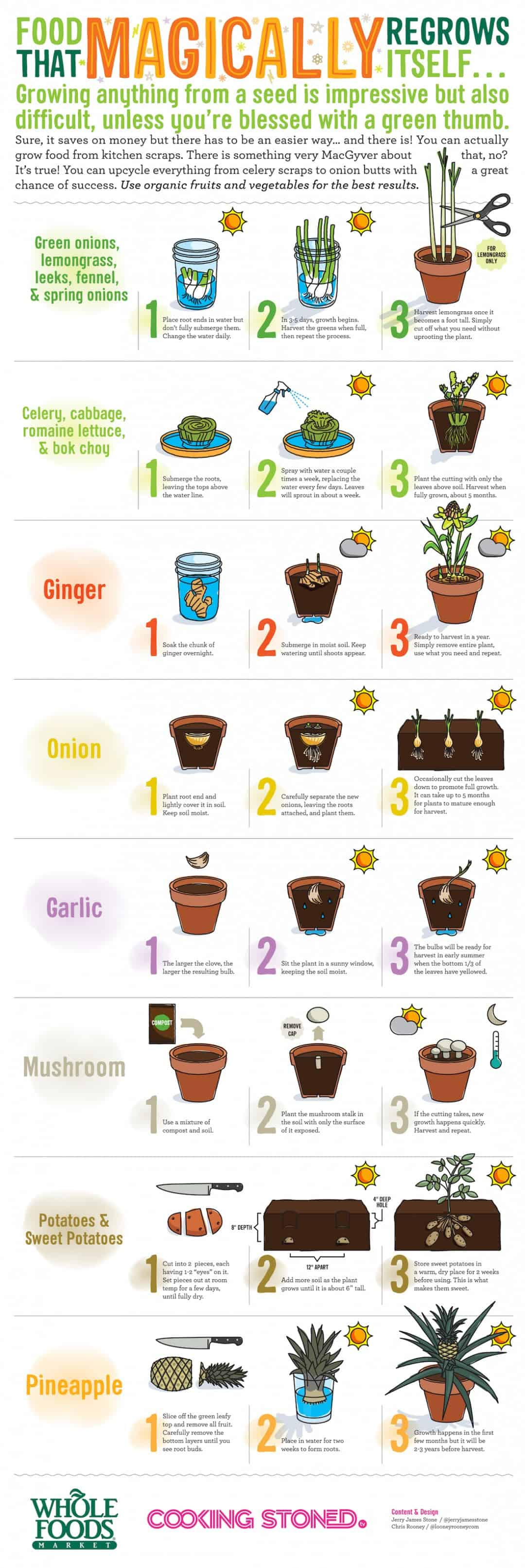 These Foods Magically Regrow Themselves From Kitchen Scraps [Infographic]