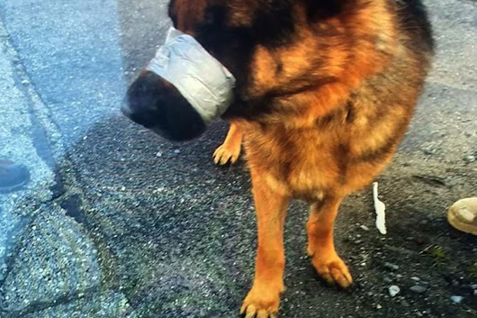 Dog Found With Mouth Duct-Taped Shut in 'Heartless' Act