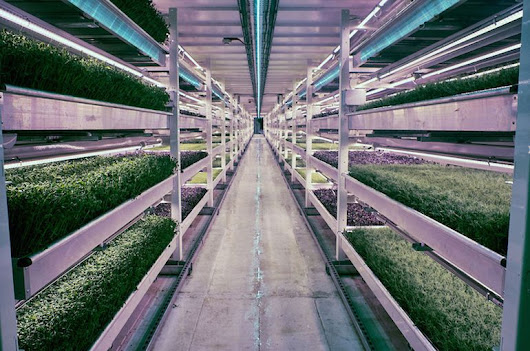 WWII Bomb Shelter Becomes London's First Underground Farm
