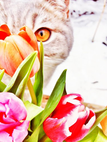 the little tulips inspector