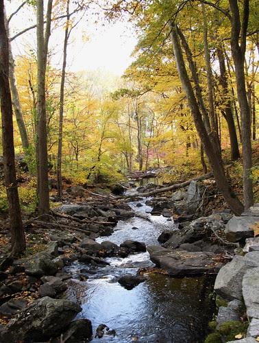Stream Between Trees