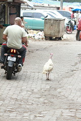 Why did the turkey cross the road? It was the chicken's day off. by firoze shakir photographerno1