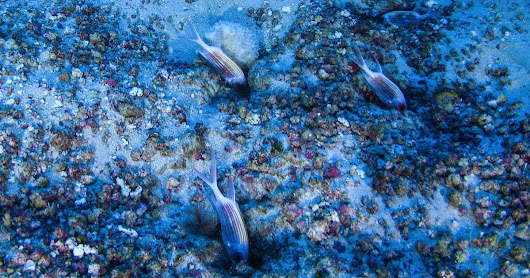 Stunning Photos Of Recently Discovered Amazon Reef Emerge As Drilling Threat Looms