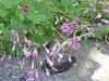 wildflowers ramni hania chania