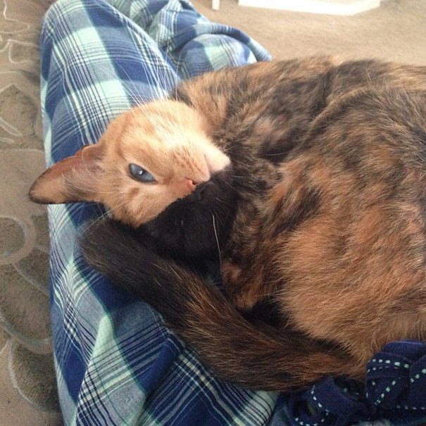 two-faced-chimera-cat-venus-26