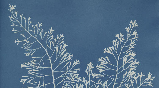 Anna Atkins published the first book with photographs. Here are a few of them.