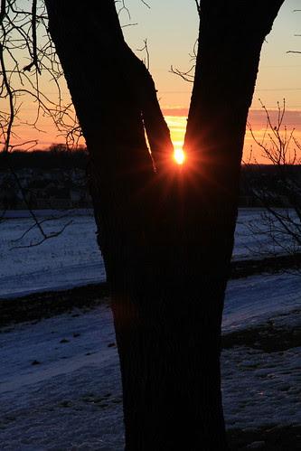 sunset_treeframe