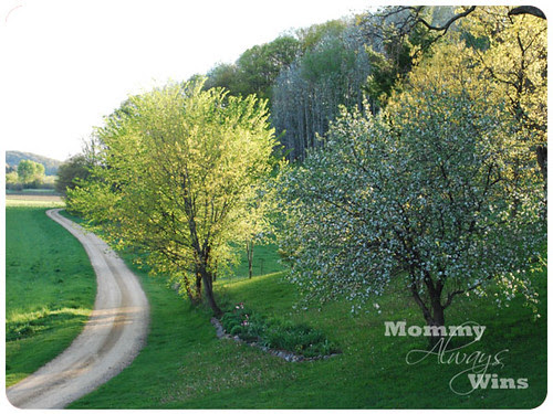 trees & road