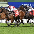 Thousand Guineas the Spring Target for Shoals