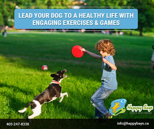 Lead Your Dog to a Healthy Life with Engaging Exercises & Games