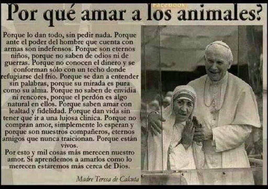 Hermoso Mensaje De La Madre Teresa De Calcuta Mascotas