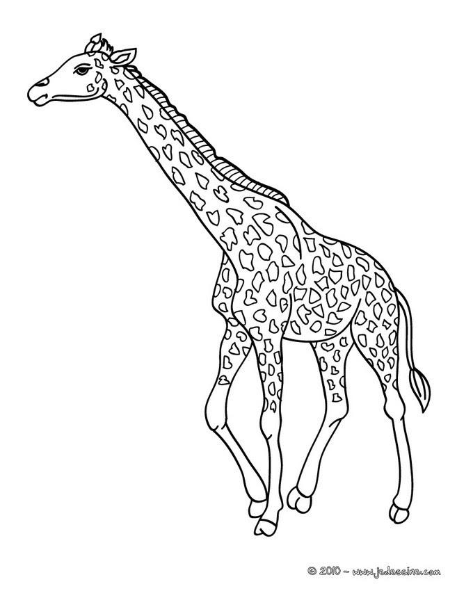 Coloriages Coloriage Dune Girafe Dans La Savane Frhellokidscom