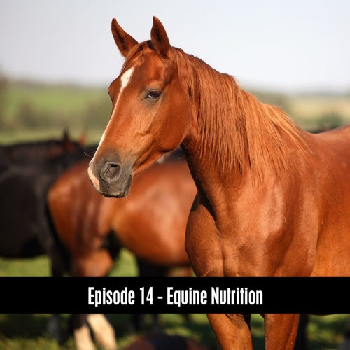 The D&B Show Episode 14 - Horse Nutrition by The D&B Supply Show