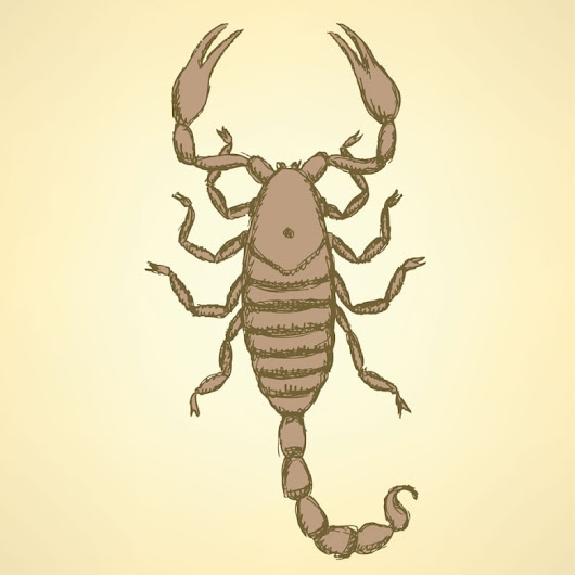 Year 'Round Scorpion Protection - Bug & Weed Mart