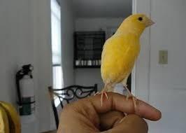 Cara Melatih Burung Agar Dapat Ff Skill Lainnya Melatih Burung Ff Dan Menjinakannya