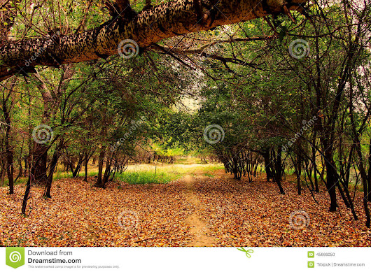 Path In The Forest Stock Photo - Image: 45666050