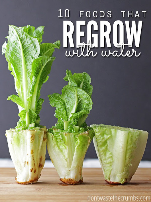 10 Foods that Regrow in Water Alone without Dirt