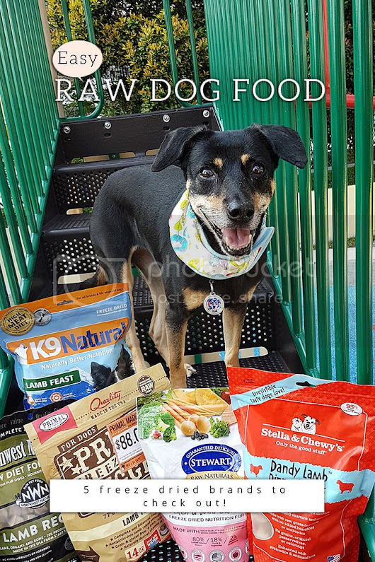 Easy raw dog food - 5 freeze dried brands to check out! - We live in a flat