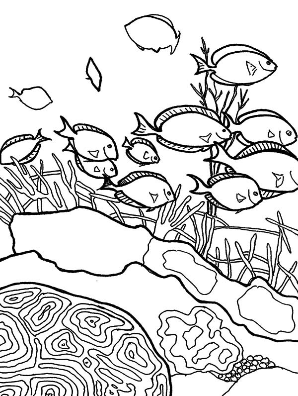 School of Coral Reef Fish Coloring Pages | Kids Play Color