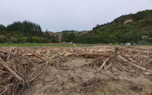 Rethink for forestry after 'disaster' at Marahau