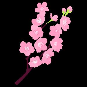 桜の枝18 花植物イラスト Flode Illustration フロデイラスト