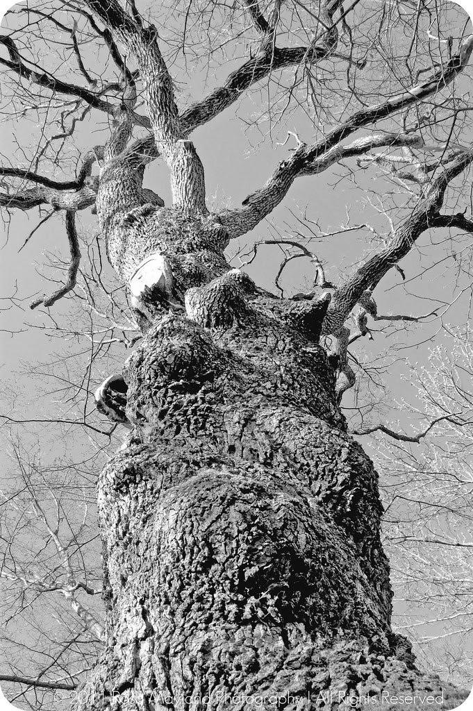 Spring Tree 1.2 bis