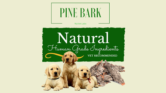 The Benefits of Pine Bark for Dogs