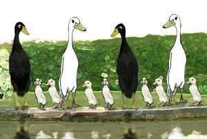Rational ducks