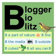 Blogger BioBlitz!