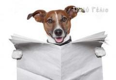 Κρύο ανεκδοτάκι: Ο χαμένος σκύλος