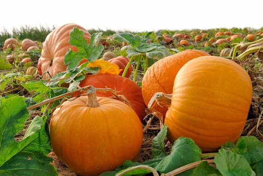 The Complete Guide to Pumpkin Health Benefits and Varieties - eCellulitis